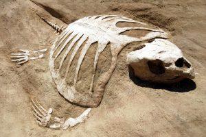 Найдена раковая опухоль возрастом 240 млн лет