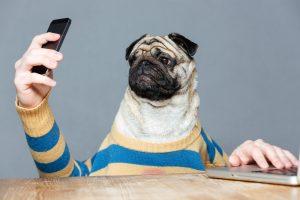 В Литве появился Tinder для знакомства с собаками