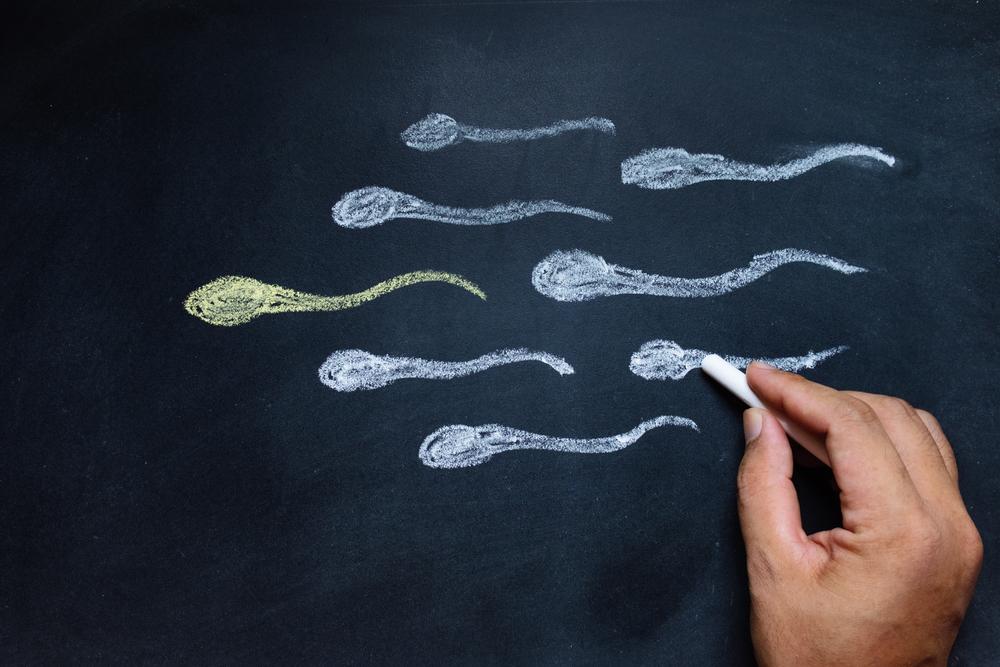 Старые сперматозоиды дают более здоровое потомство — биологи