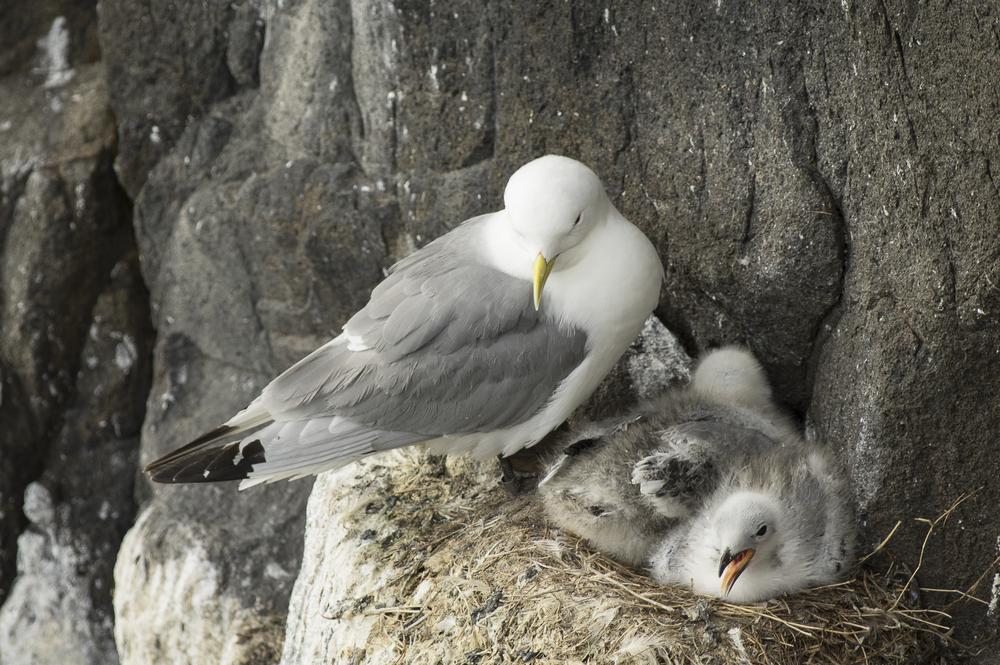 Пластиковые химикаты оказались в яйцах арктических птиц