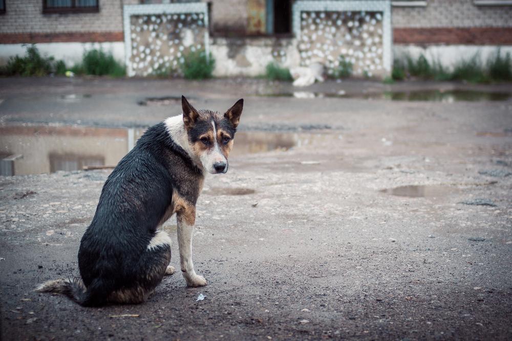 Венесуэльцы массово выбрасывают домашних животных, поскольку не могут их прокормить