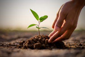 Для борьбы с глобальным потеплением нужно посадить триллион деревьев