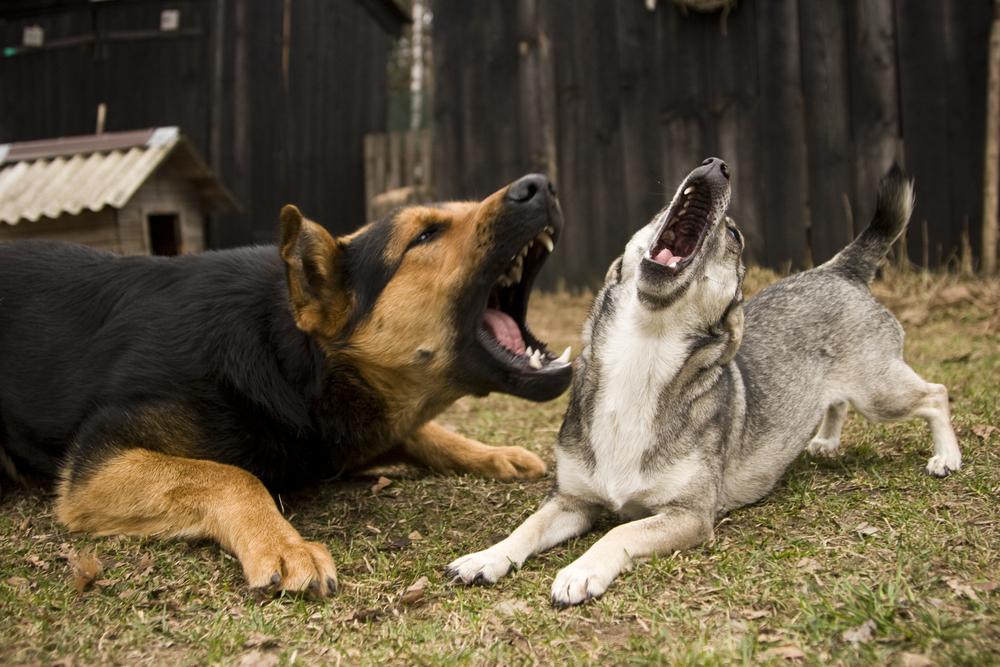 Во Франции будут штрафовать за чрезмерный лай собак