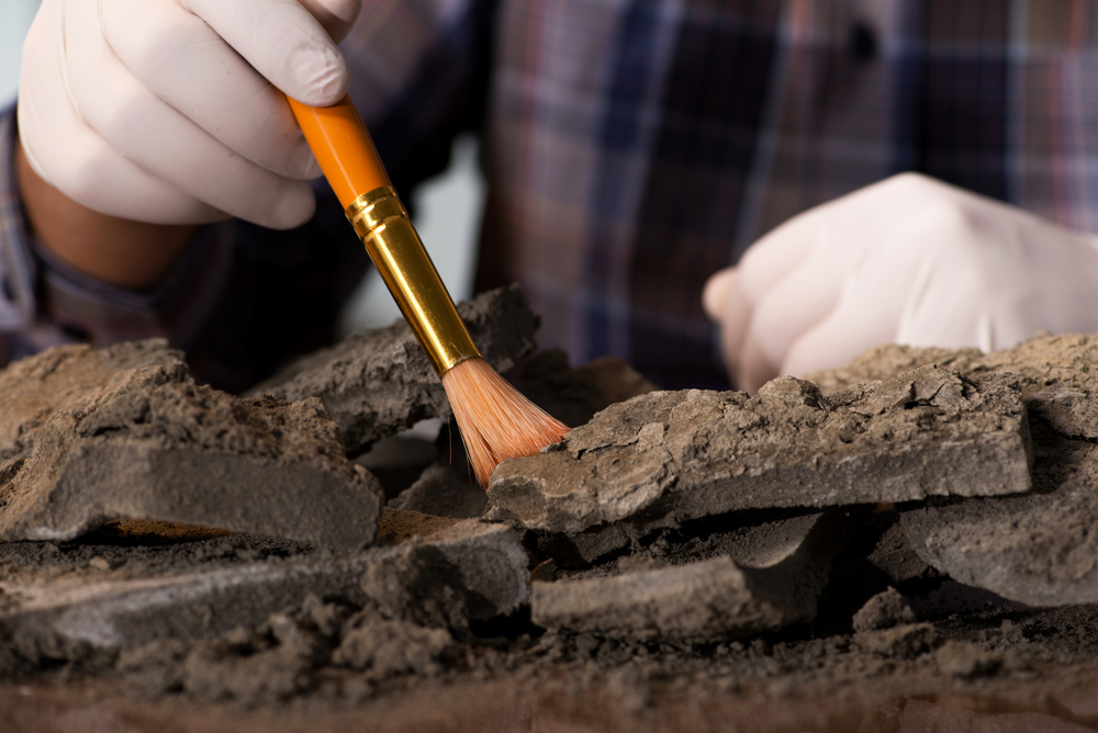 В Габоне обнаружили останки древнейших многоклеточных существ.Вокруг Света. Украина