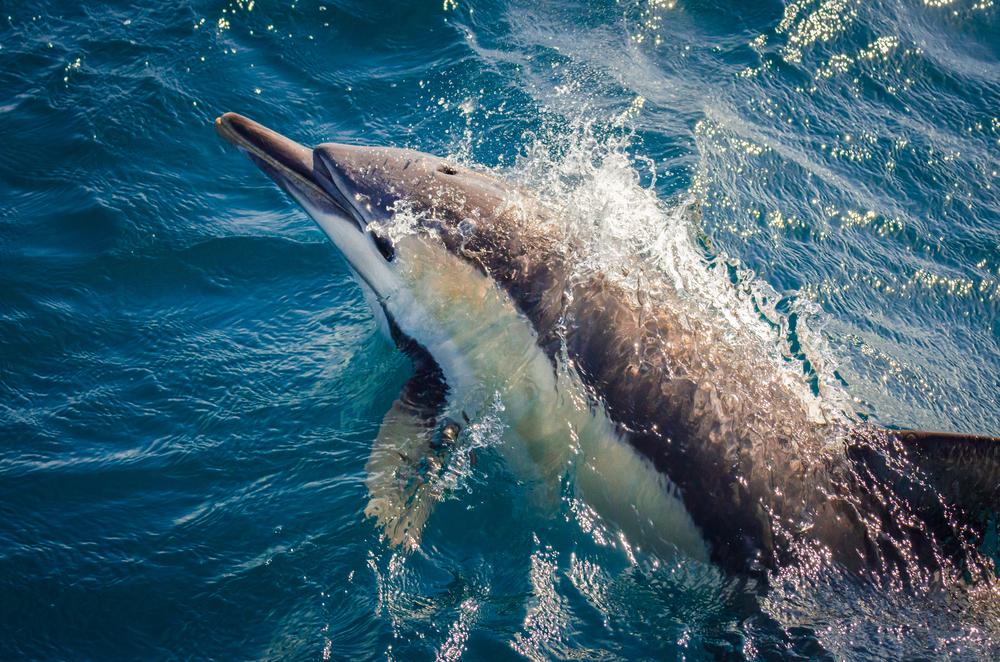 Каждый дельфин, кит и тюлень в океане отравлены пластиком