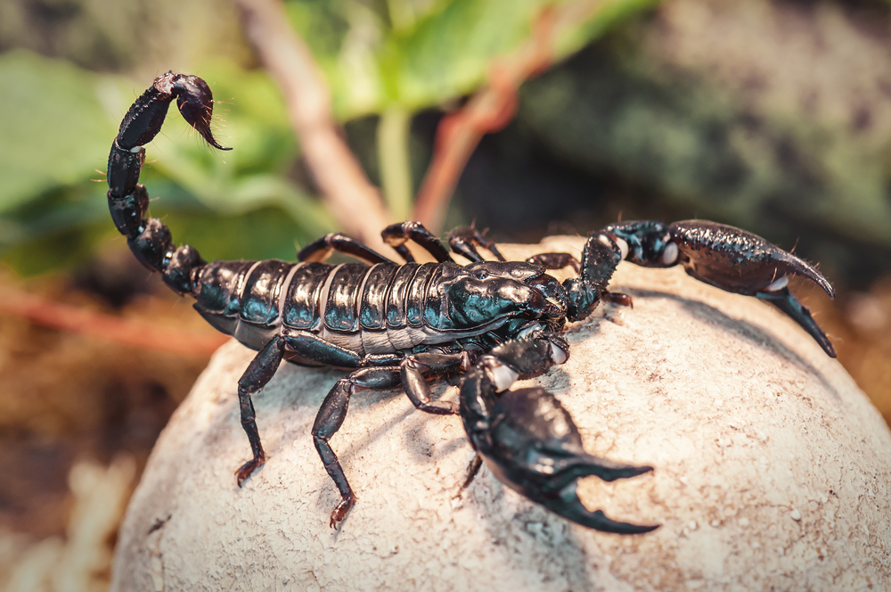 В Индонезии огромный скорпион пробрался на борт самолета.Вокруг Света. Украина