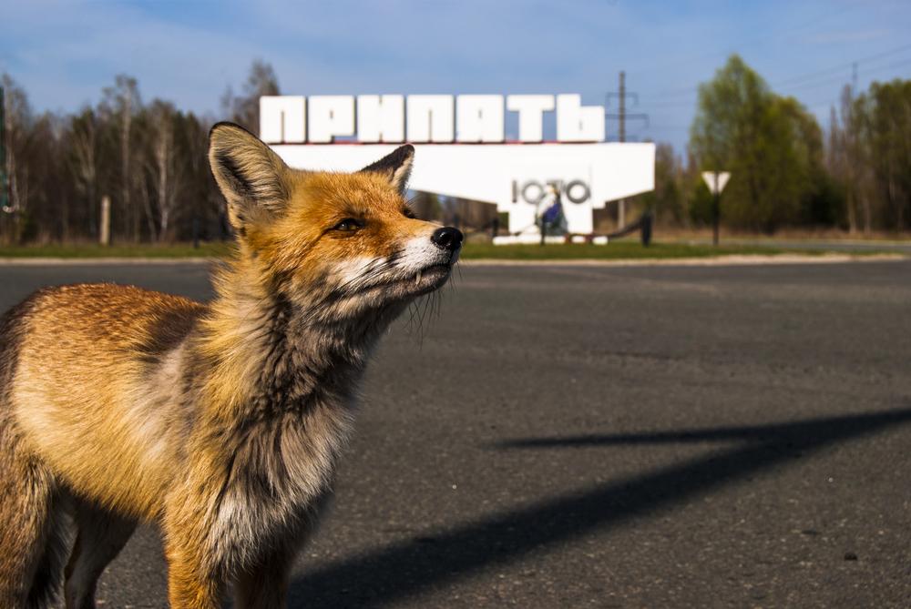 Без людей: Чернобыль превратился в экосистему, полную жизни