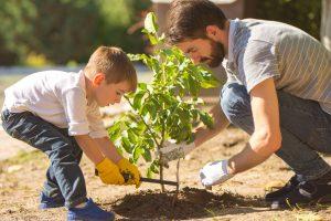 Брюссель посадит дерево для каждого ребенка, родившегося в городе