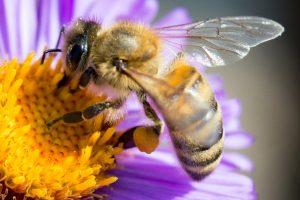 Пчелы оказались способны складывать и вычитать