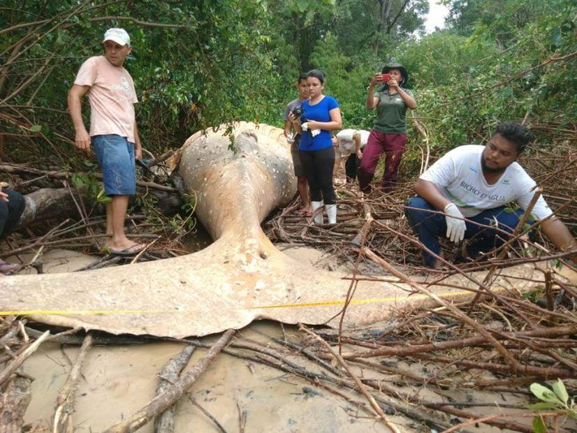 В джунглях Бразилии нашли горбатого кита