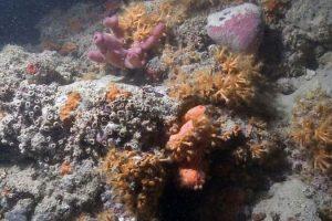 У берегов Италии найден уникальный коралловый риф