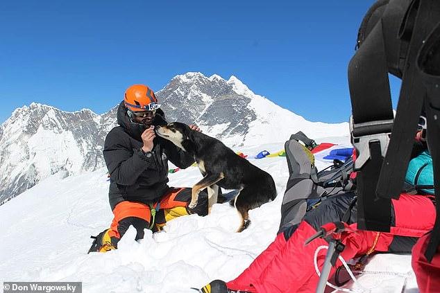 Непальская дворняга покорила Гималаи и установила мировой рекорд
