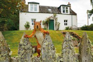 Удивленная белка и любознательный барсук: британский фотоконкурс дикой природы выбирает победителя