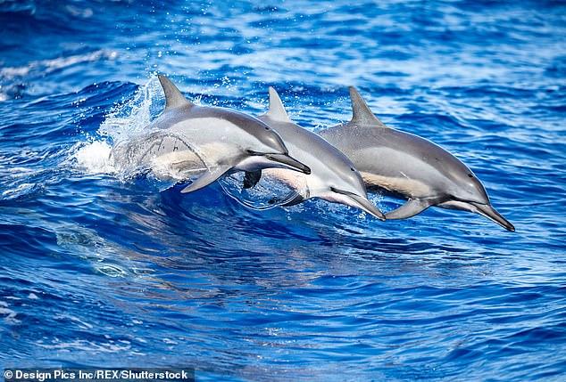 Цветение воды в океанах вызывает у дельфинов слабоумие
