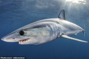 На четверть меньше: в Красном списке мира оказалось еще 17 разновидностей акул