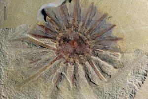 Ученые нашли останки странного животного возрастом 518 млн лет