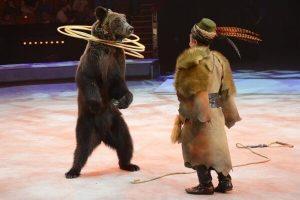 В Киеве запретили выступления шапито с животными