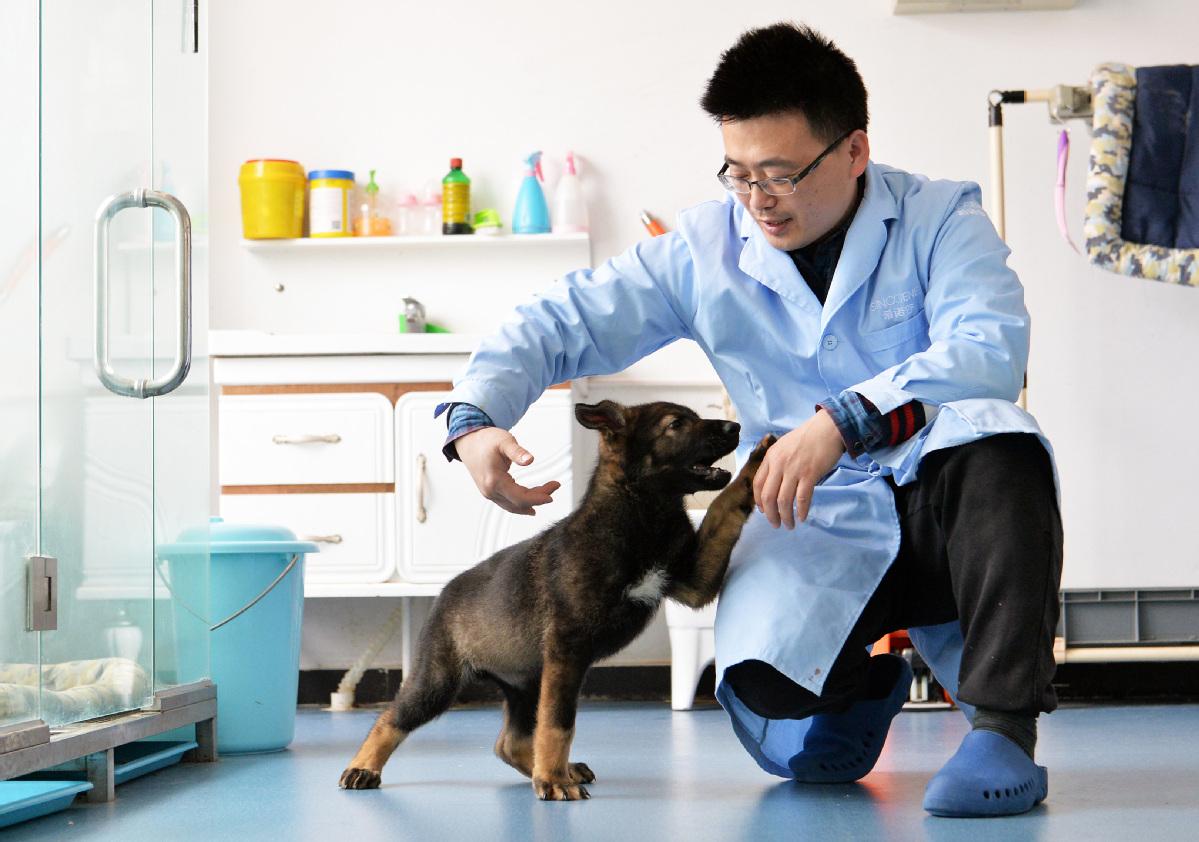 В Китае клонировали лучшую полицейскую собаку страны
