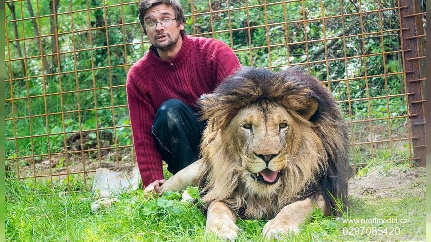 В Чехии «домашний» лев убил своего хозяина