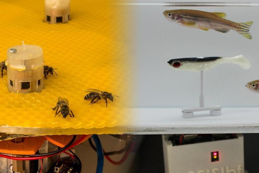 Ученые создали робота-переводчика с рыбьего на пчелиный.Вокруг Света. Украина