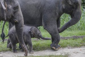 Сафари-туристы делают слонов жестокими