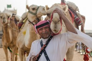Никакого ботокса: в ОАЭ ужесточили правила конкурса красоты среди верблюдов