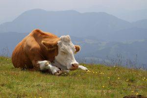 В каких позах спят животные и почему