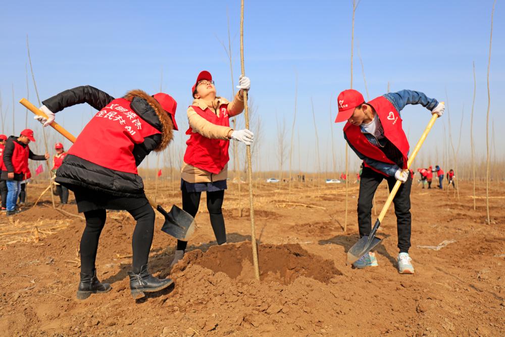 День посадки деревьев в Китае и Тайване