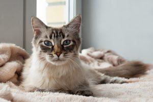 Правда ли, что коты лечат?