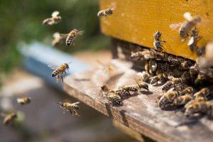 Экологи научились определять уровень загрязнения воздуха по пчелиным ульям