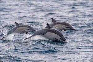 Жестокая охота: ученые протестуют против убийства дельфинов в Японии