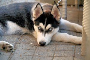 American Airlines оштрафовали на 13 тысяч долларов за жестокое обращение с животными
