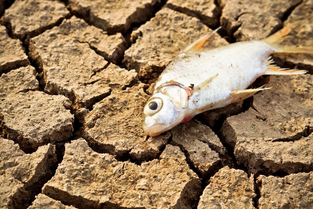 США ждет нехватка питьевой воды уже в ближайшие 50 лет: ученые