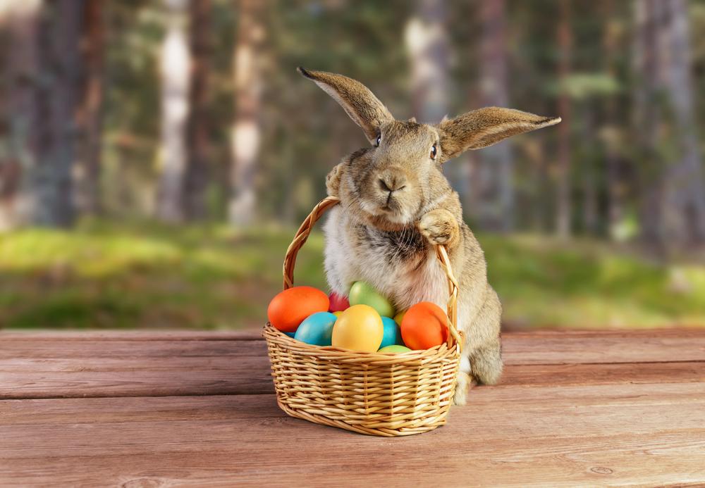 Письмо пасхальному зайцу: три адреса на выбор.Вокруг Света. Украина