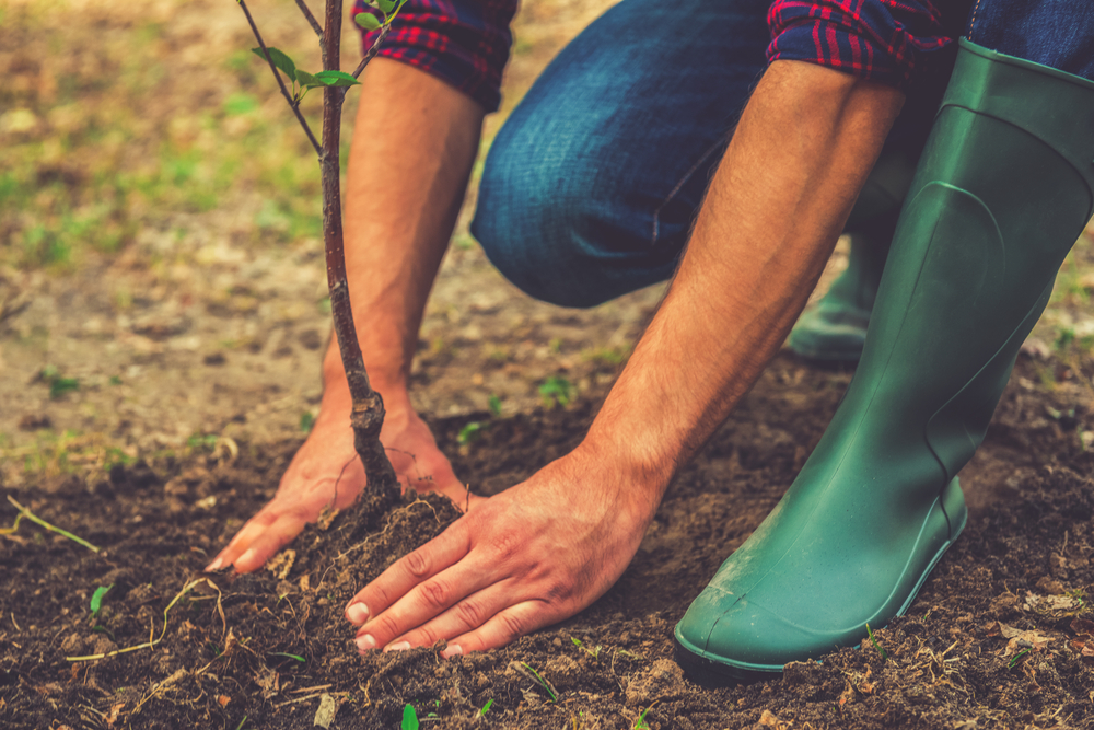 Киевлян приглашают озеленить столицу