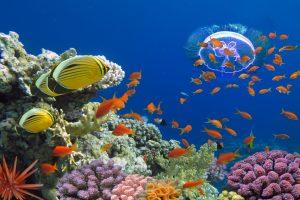Израиль пустил дайверов к закрытым коралловым рифам Красного моря