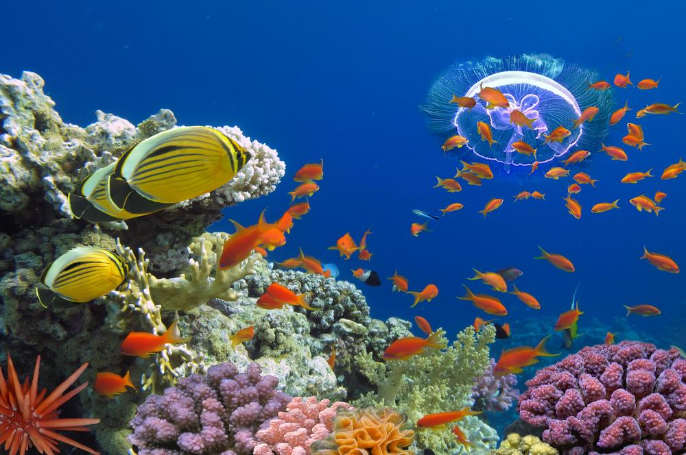 Израиль пустил дайверов к закрытым коралловым рифам Красного моря.Вокруг Света. Украина
