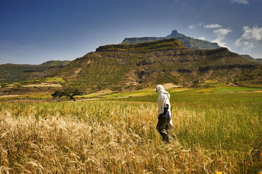 Глобальное потепление превращает зерновые культуры в яд