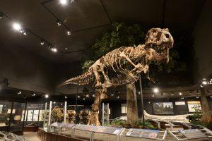 Палеонтологи обнаружили крупнейшего тираннозавра рекса