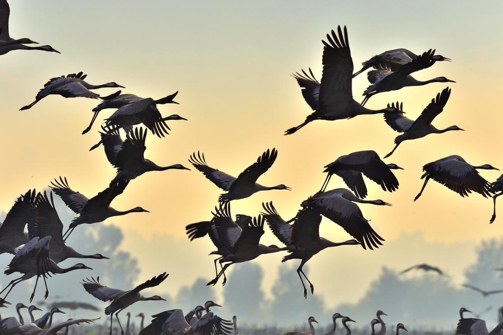 Шестое чувство: люди ловят магнитное поле Земли, как птицы и звери