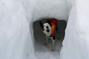 Тренировка собаки-спасателя в Великобритании (видео)
