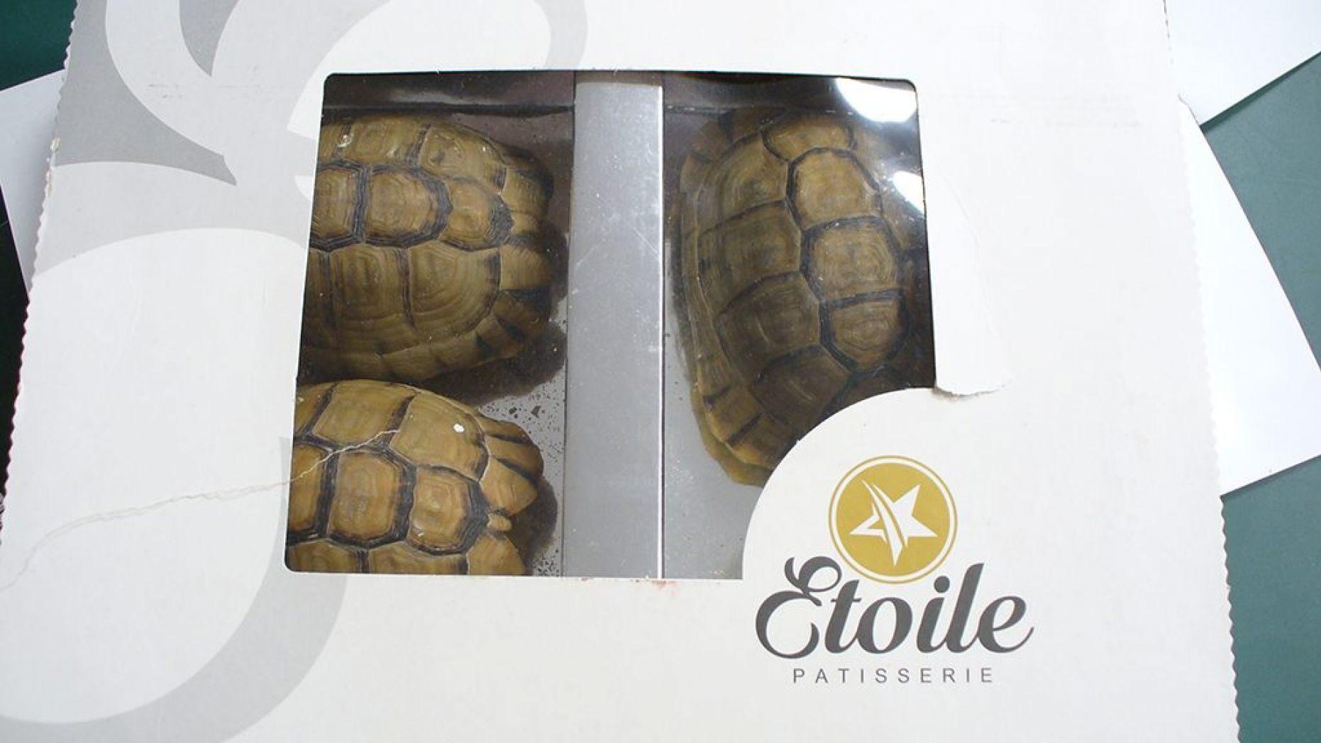 Пассажир замаскировал черепах под пирожные, чтобы вывезти из Берлина