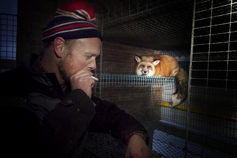 Норвегия запретит меховые фермы к 2025 году