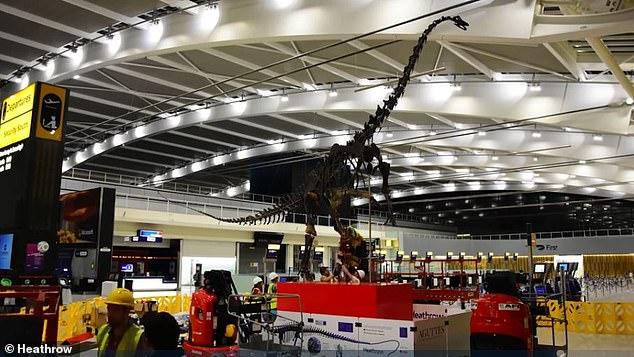 Аэропорт Хитроу установи гигантский скелет динозавра возрастом 155 миллионов лет (таймлапс-видео)