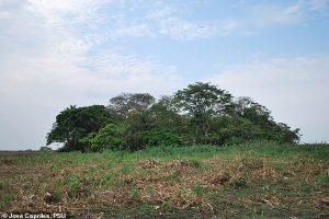 Поселения в дождевых лесах Амазонки появились на 7,5 тысяч лет раньше, чем думали
