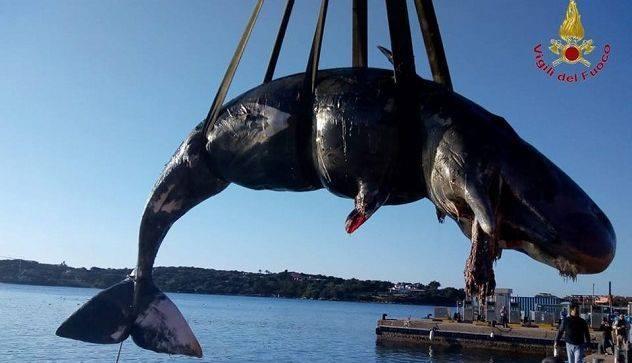 На Сардинии беременная самка кита погибла из-за мусора