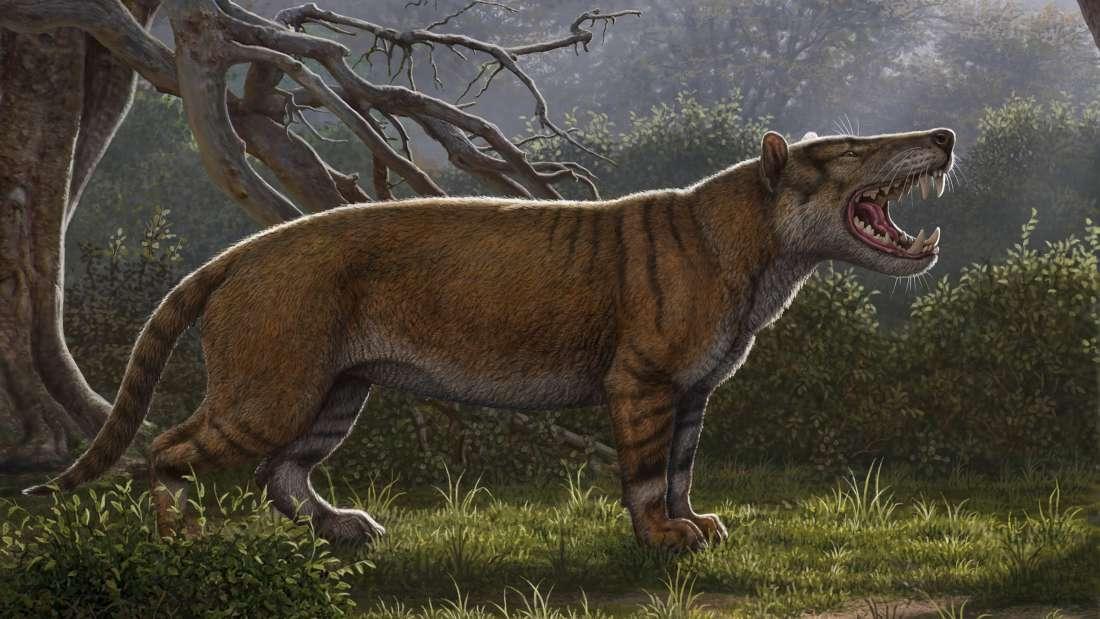 В кенийском музее нашли кости неизвестного гигантского хищника