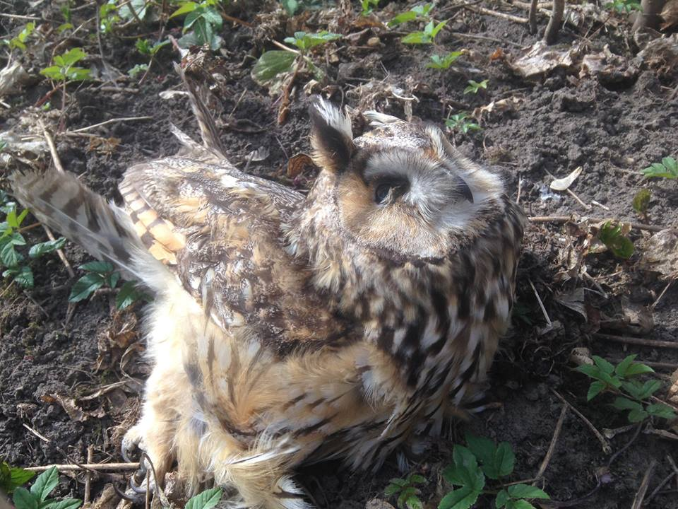 В Тернопольской области массово гибнут птицы и животные