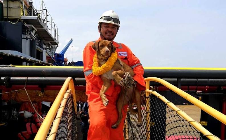 В Таиланде спасли собаку в 220 км от берега