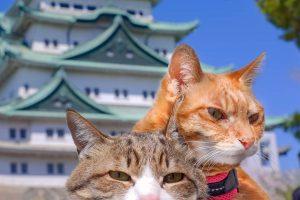 Японец путешествует по стране с двумя котами в рюкзаке